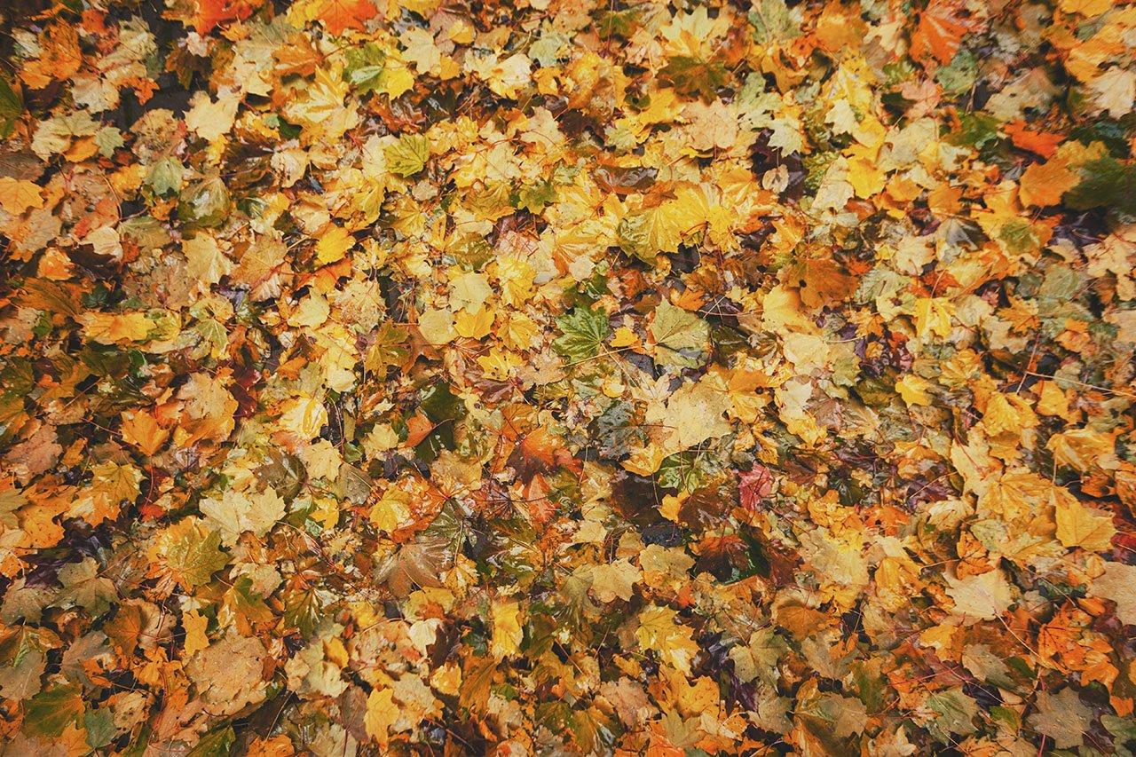 Осенние листья летят, фото-6