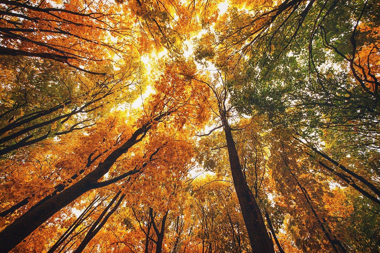 Осенние листья летят, фото-8