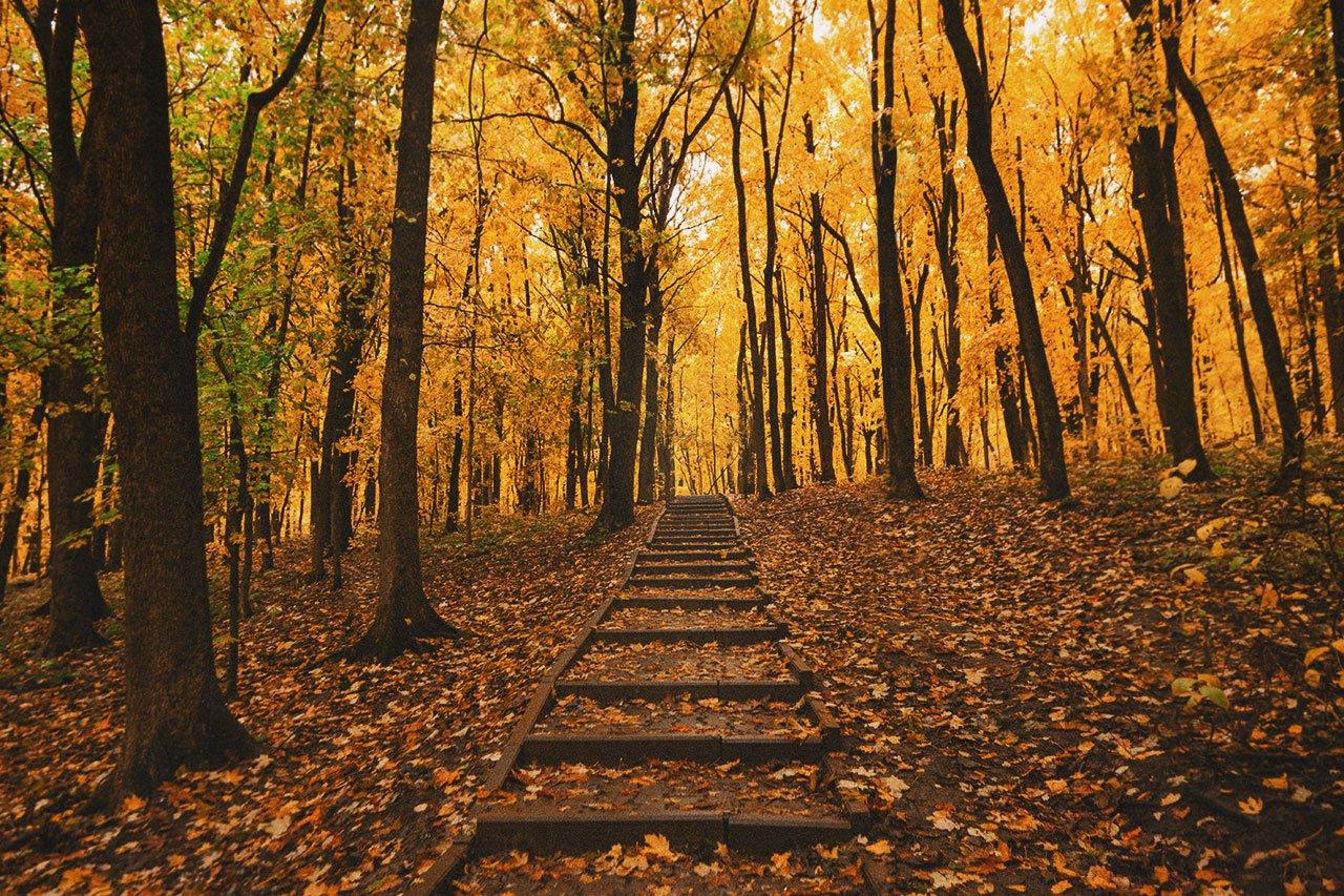 Осенние листья летят, фото-9