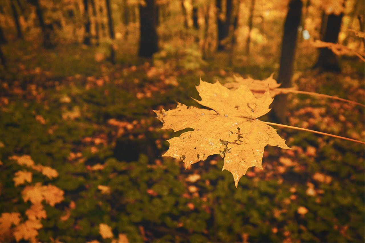 Осенние листья летят, фото-10
