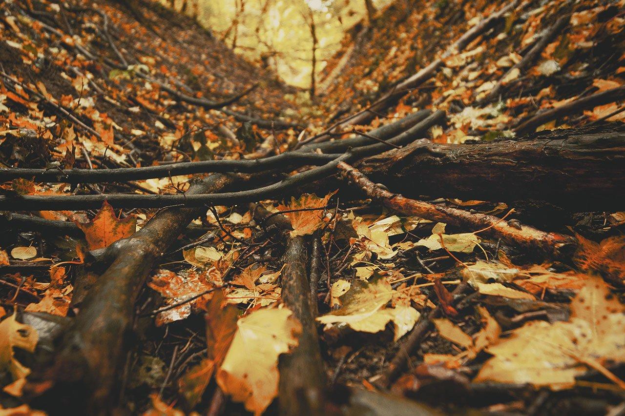 Осенние листья летят, фото-11