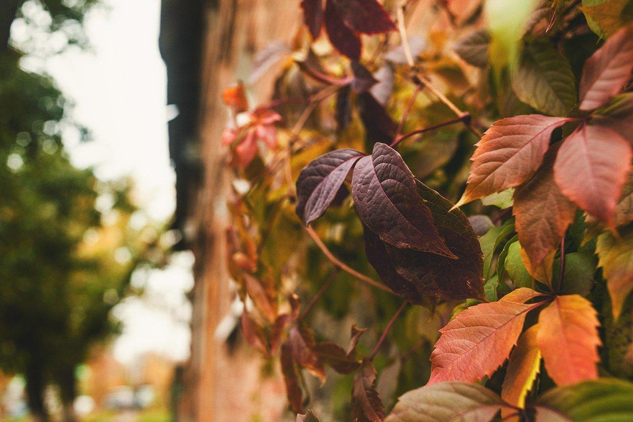 Осенние листья летят, фото-14