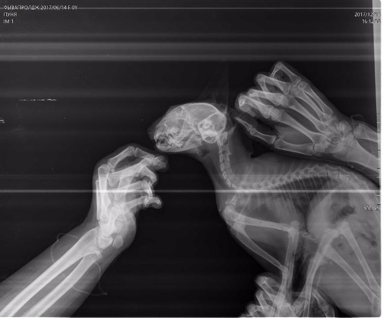 Белгородец жестоко избивал котёнка на глазах у детей, фото-2