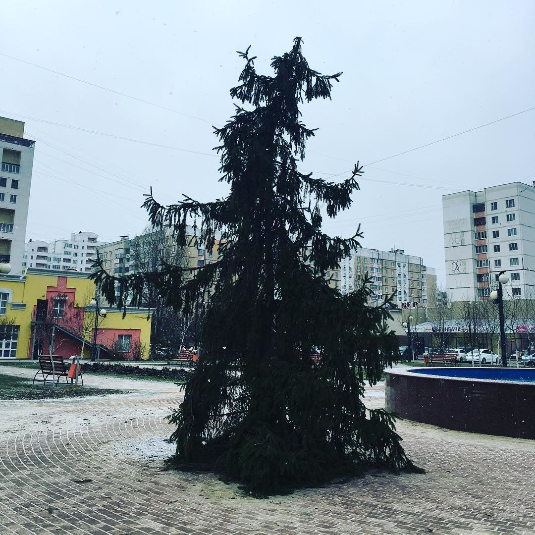 Белгородцы пожаловались на страшненькую ёлку на Харгоре. Её решили убрать, фото-1