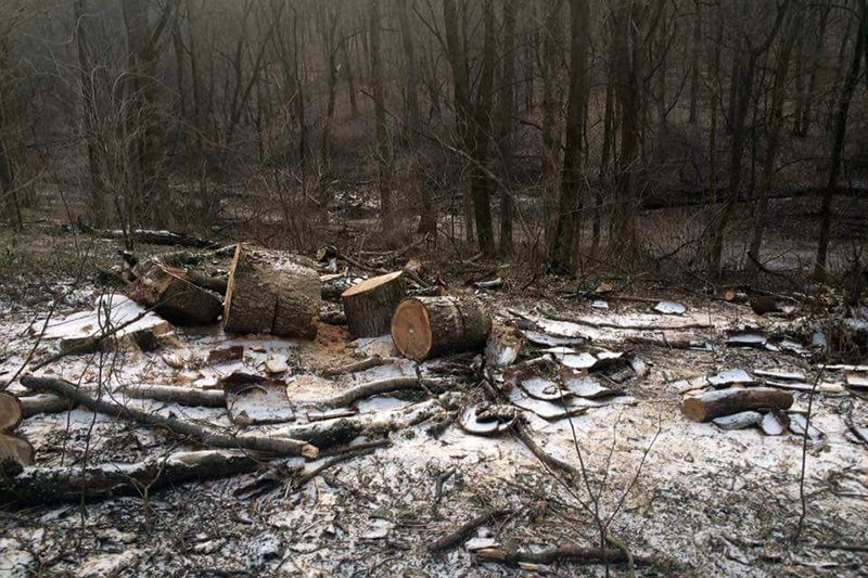 Жители Белгорода обеспокоены вырубкой деревьев в Архиерейской роще , фото-1