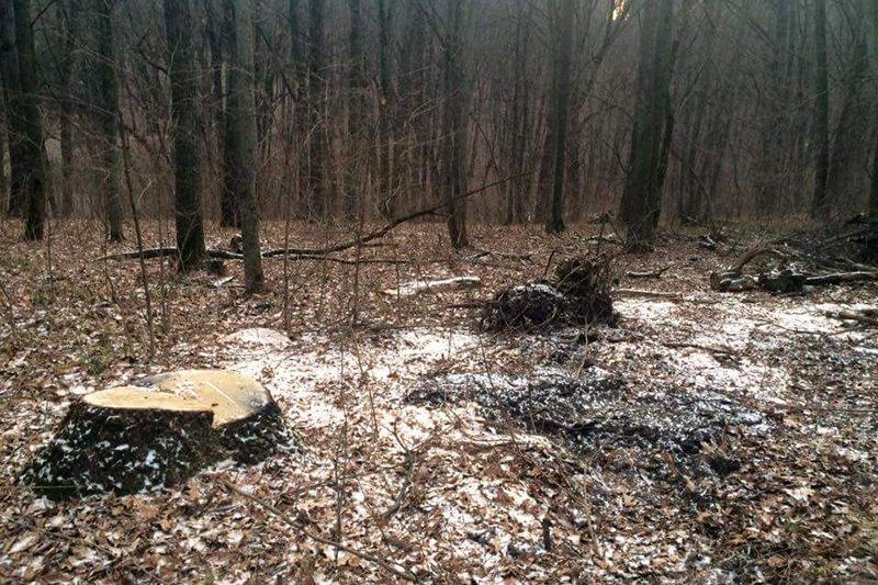 Жители Белгорода обеспокоены вырубкой деревьев в Архиерейской роще , фото-2