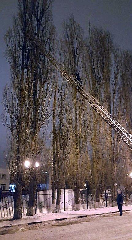 Спасённого в Шебекине котёнка назвали в честь дерева, фото-2