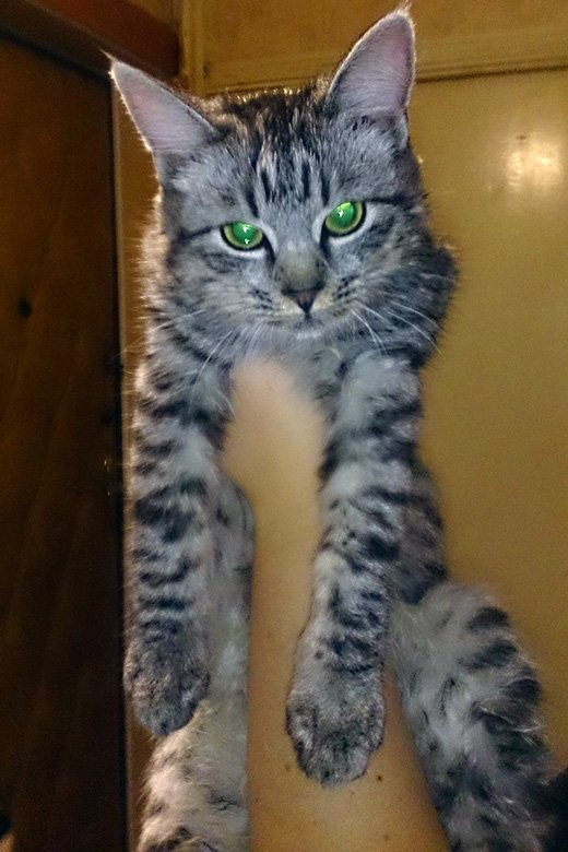 Спасённого в Шебекине котёнка назвали в честь дерева, фото-3