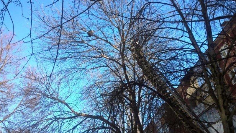 В Белгороде пожарные спасли забравшуюся на макушку дерева кошку, фото-1