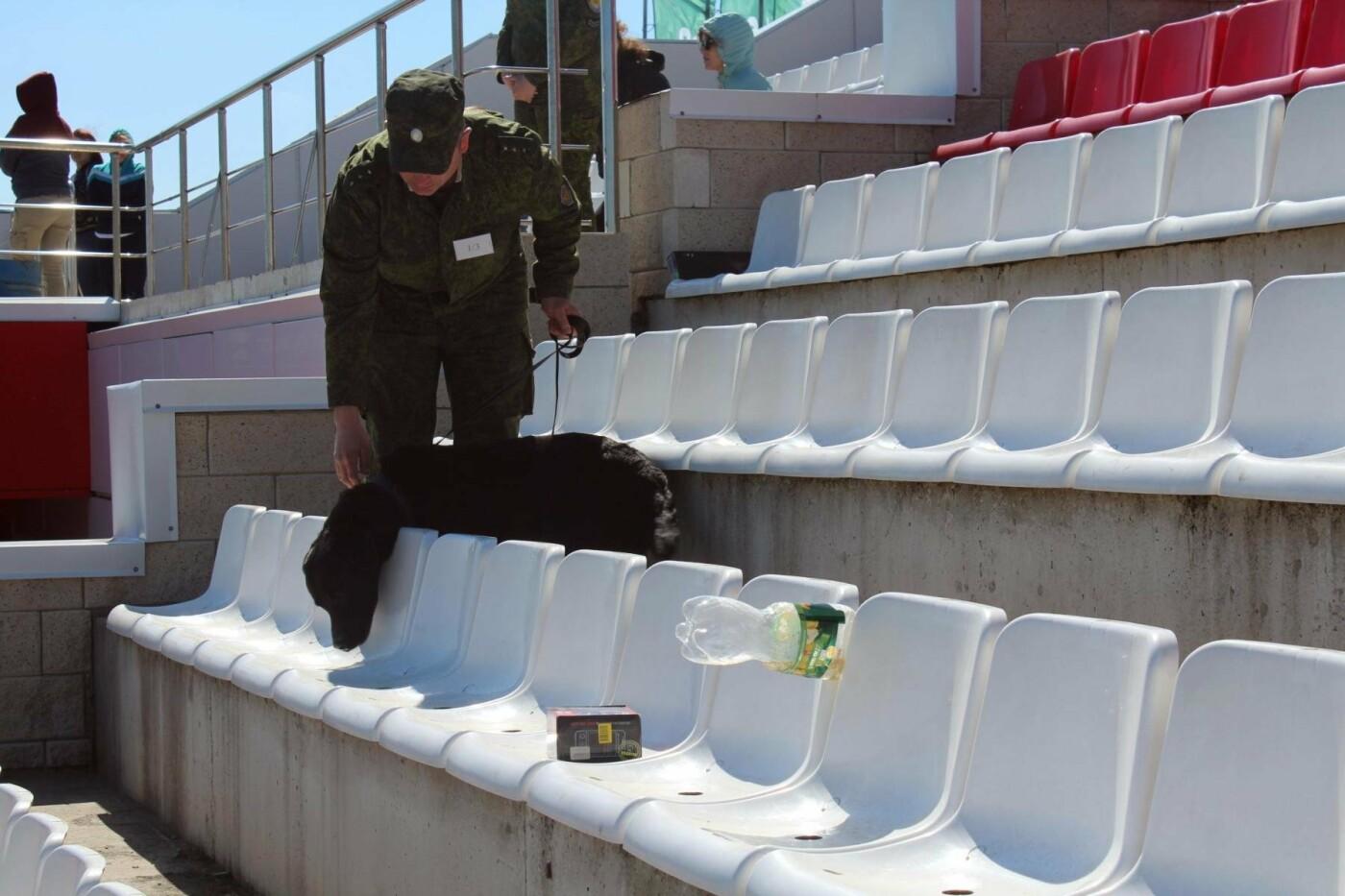 Кинологи со всего Черноземья искали взрывчатку на соревнованиях в АСК «Вираж», фото-1