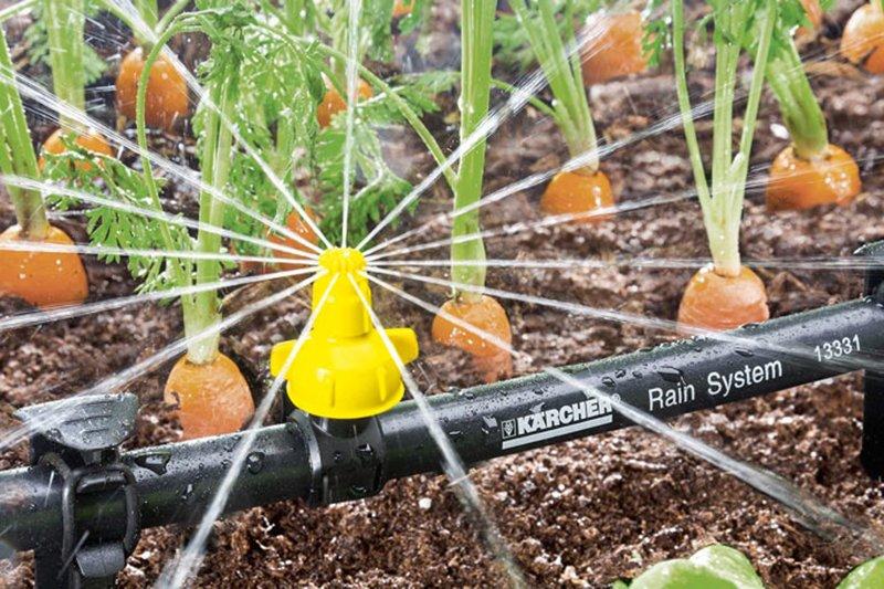 Садово-огородная жизнь. «Керхер» знает, как получить хороший урожай, фото-3