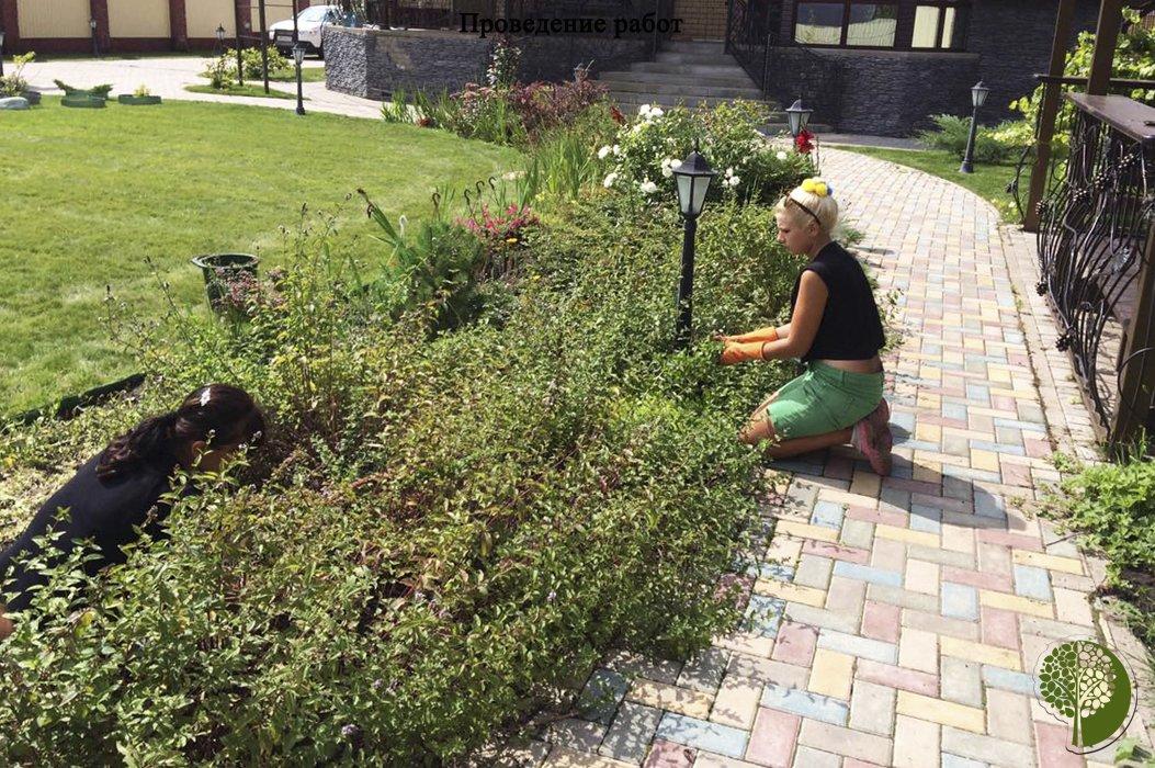 Чужими руками. «Зелёный мир» сделает ваш сад и двор красивыми, фото-6