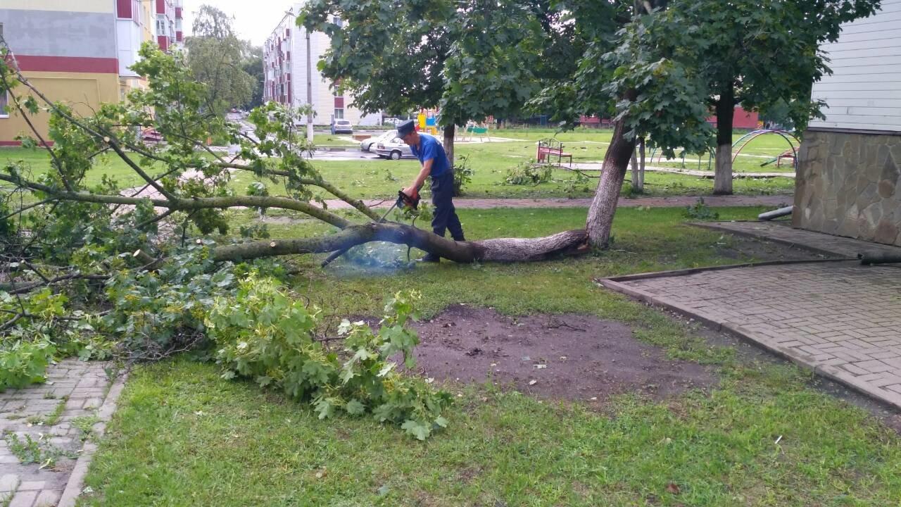 Под Белгородом непогода вырвала с корнем деревья, фото-3