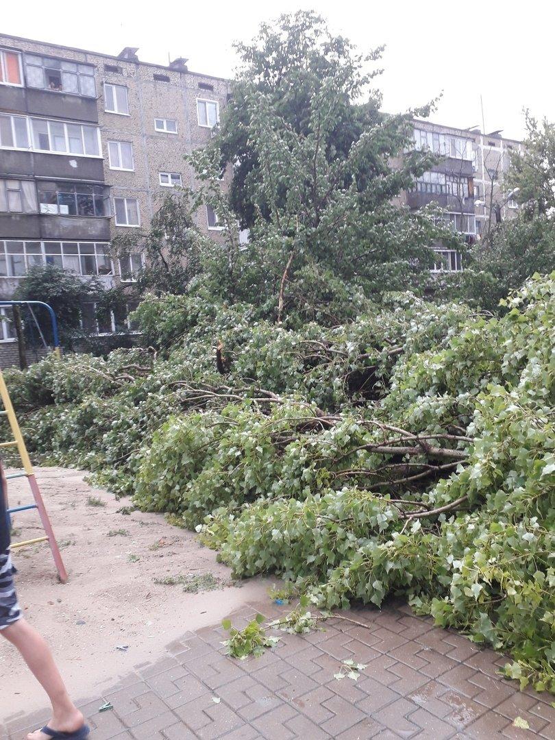 Под Белгородом непогода вырвала с корнем деревья, фото-2