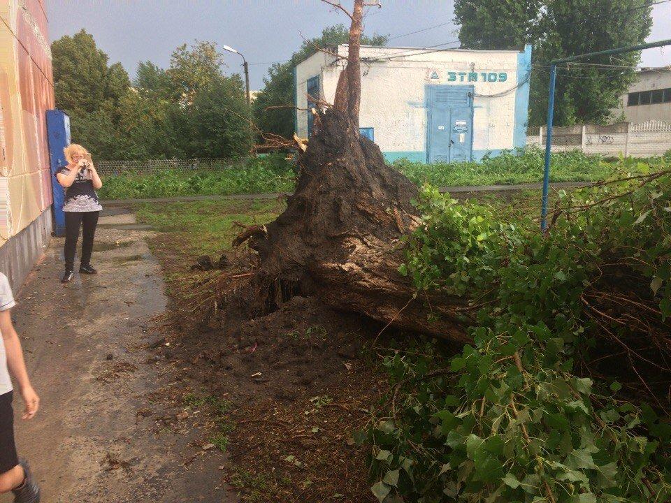 Под Белгородом непогода вырвала с корнем деревья, фото-1