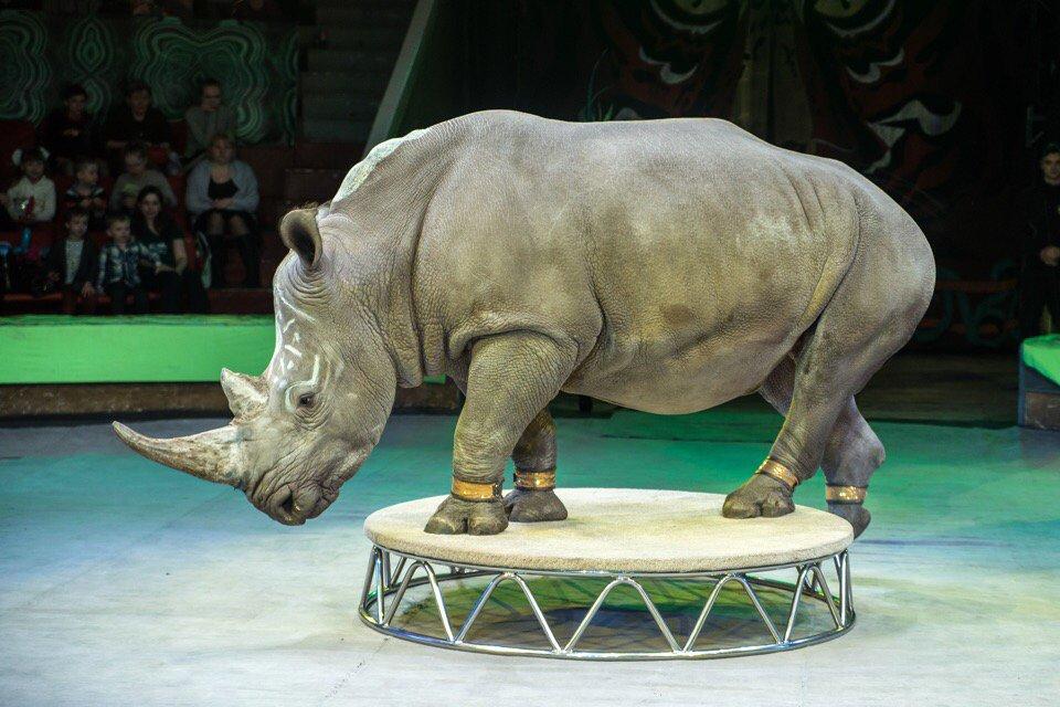 Эквилибристы, белые тигры и носорог. Белгородцев ждут на шоу «Планета Цирк», фото-2