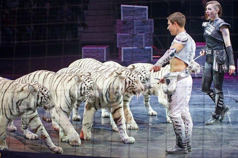 Эквилибристы, белые тигры и носорог. Белгородцев ждут на шоу «Планета Цирк», фото-1