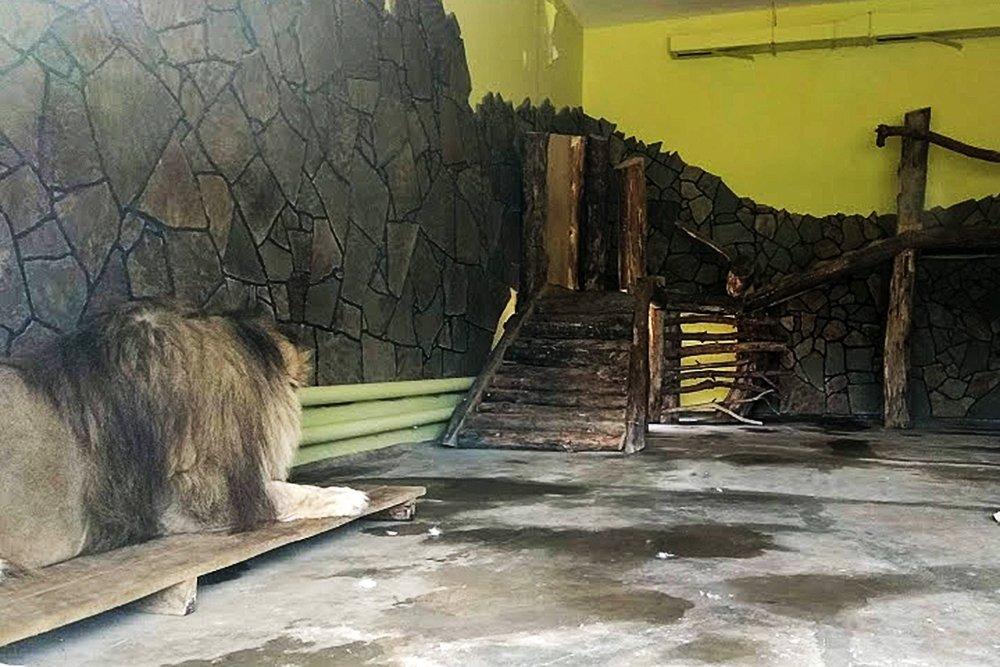 Львиное сердце. Go31 о характерах символов Белгорода из зоопарка , фото-19