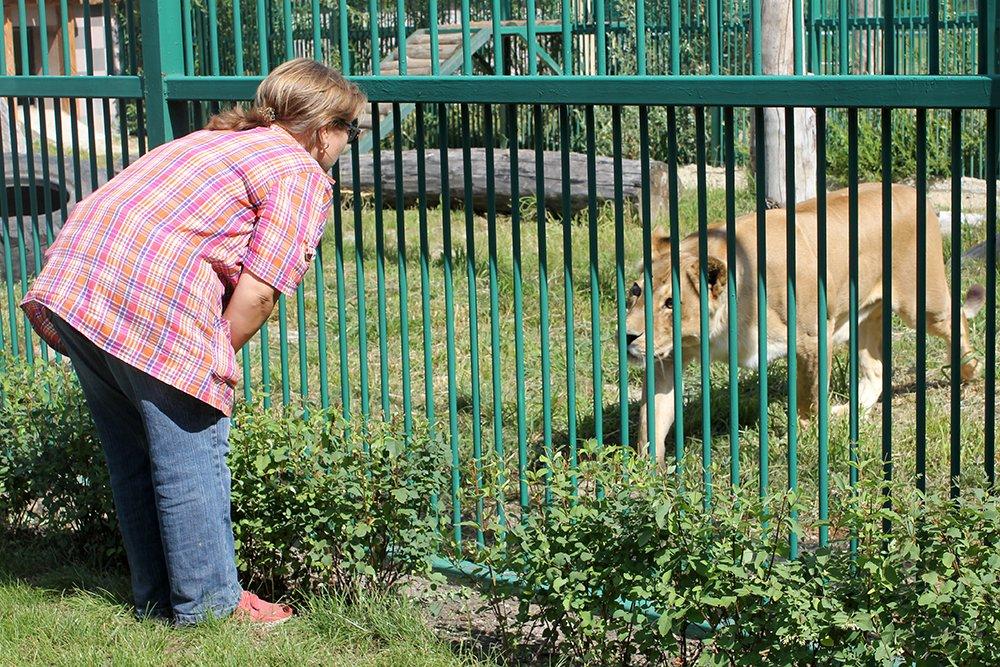 Львиное сердце. Go31 о характерах символов Белгорода из зоопарка , фото-9