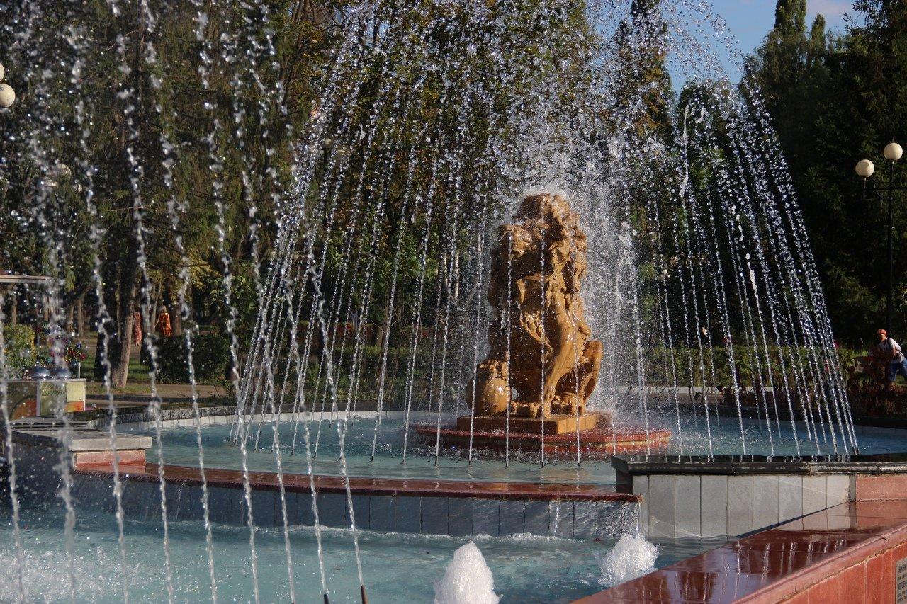 Львы заполонили улицы Белгорода, фото-16