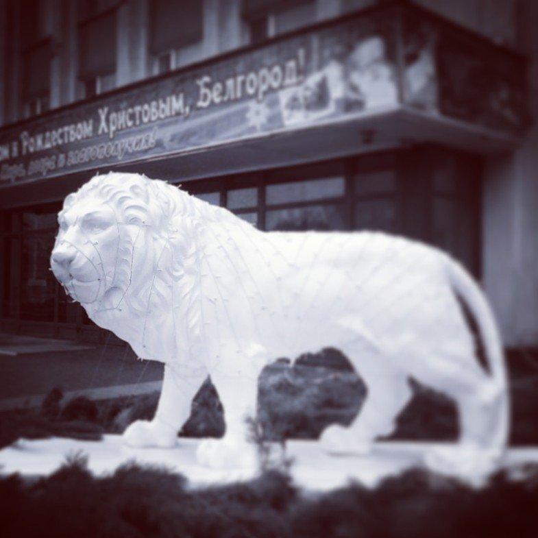 Львы заполонили улицы Белгорода, фото-7