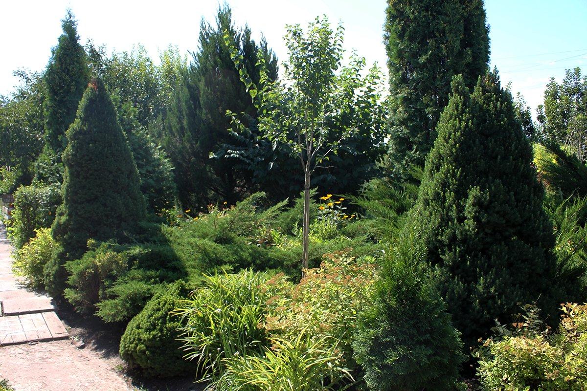 Голландия рядом. Саженцы из питомника «Никольское» создадут уникальную атмосферу в вашем саду, фото-21