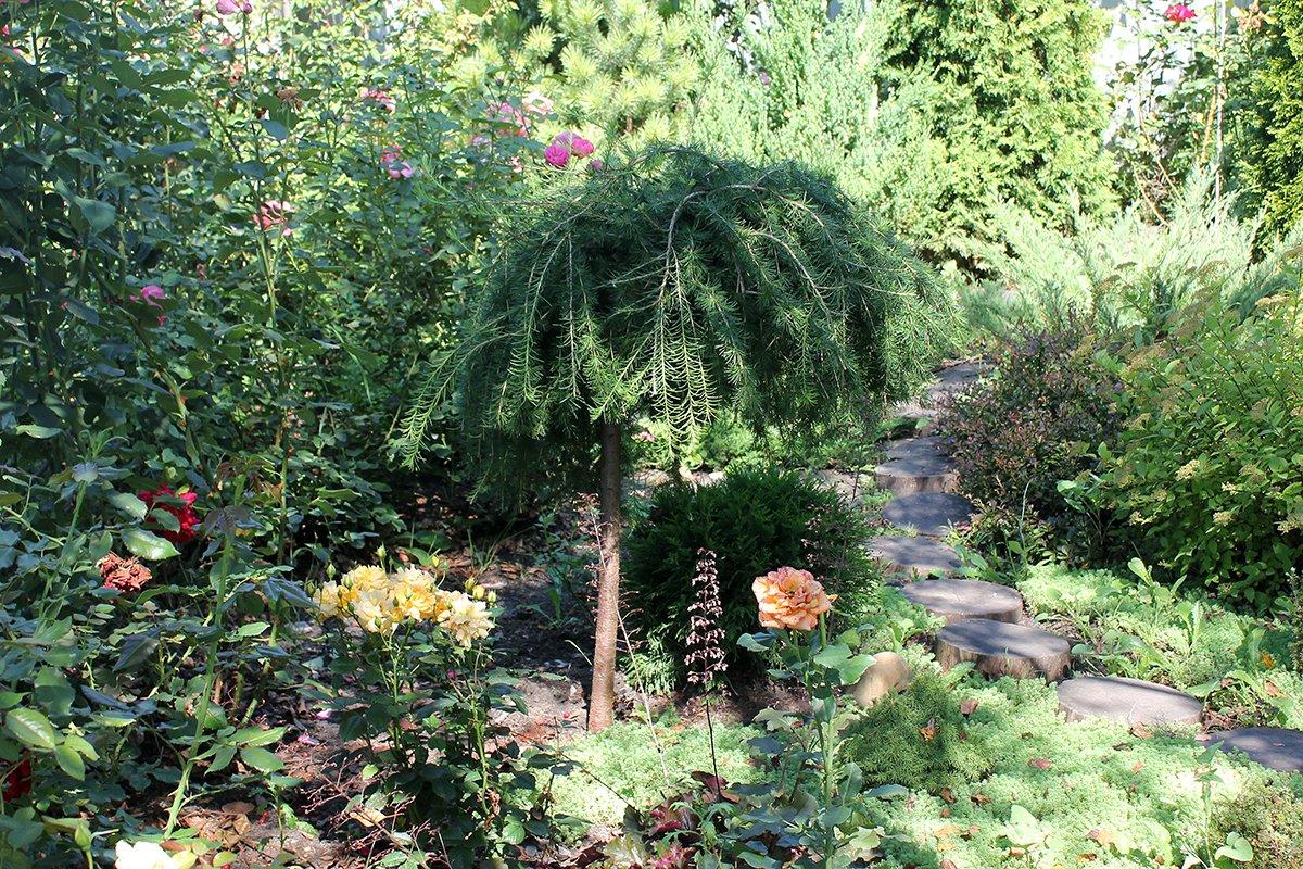 Голландия рядом. Саженцы из питомника «Никольское» создадут уникальную атмосферу в вашем саду, фото-22