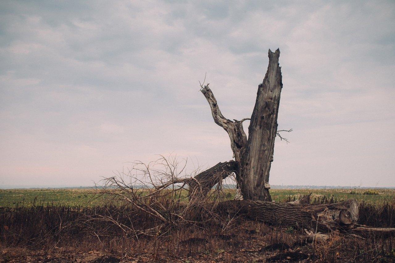 Туман, пожар, взятка с поличным и «беспрецедентный» рост зарплат в карманах белгородцев, фото-4, Фото Аллы Григорьевой
