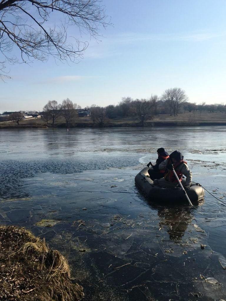 Спасение отбившегося от стаи лебедя под Белгородом не увенчалось успехом, фото-5