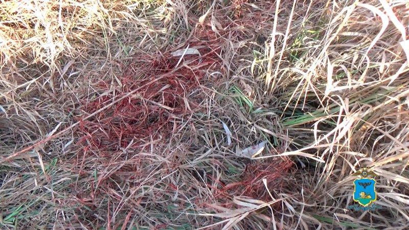 Под Белгородом браконьеры застрелили самку благородного оленя, фото-2