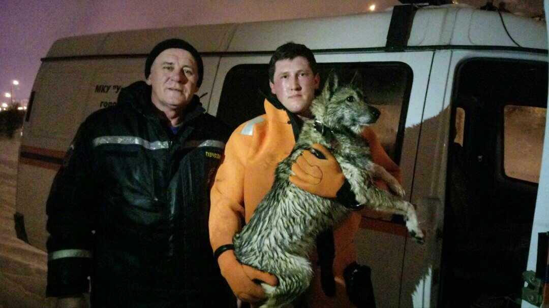 В Белгороде спасли провалившуюся под лёд собаку , фото-1