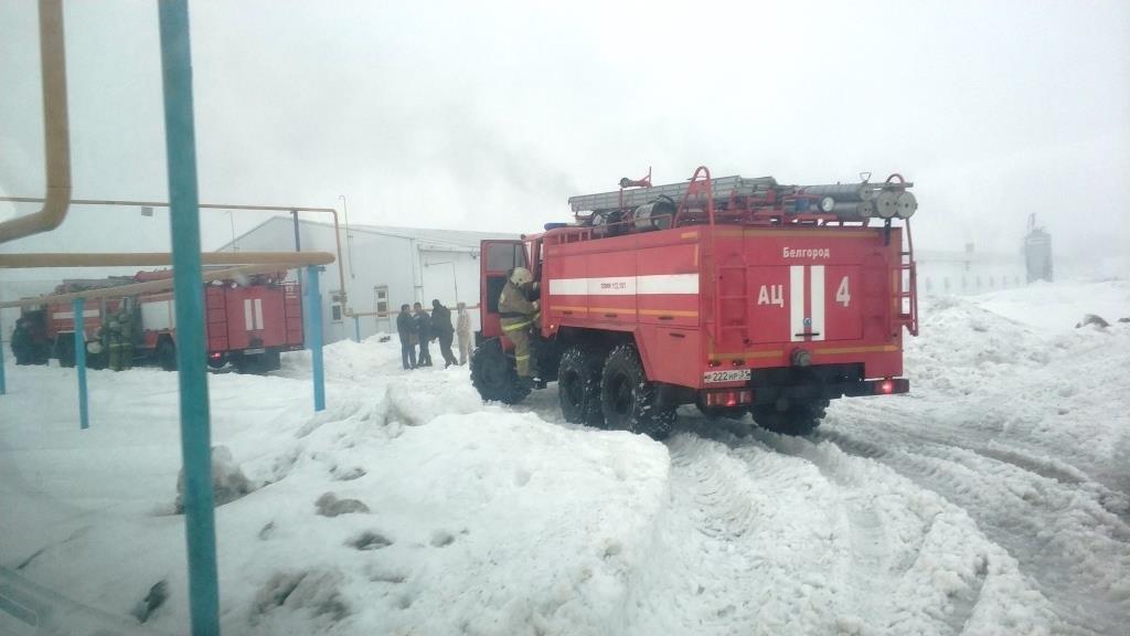 В Разумном произошёл пожар на птицефабрике, фото-2