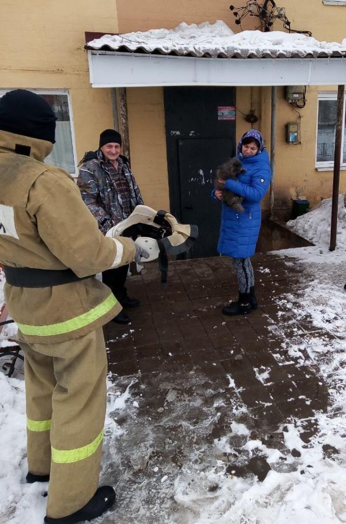 В Прохоровке спасатели сняли сидевшую два дня на дереве кошку, фото-3