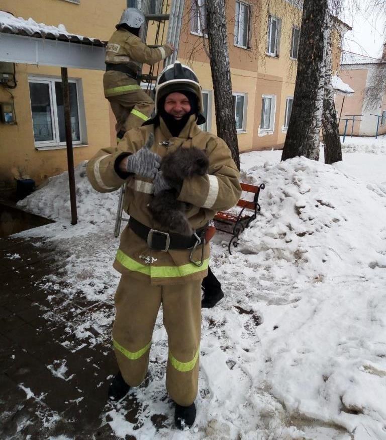 В Прохоровке спасатели сняли сидевшую два дня на дереве кошку, фото-2