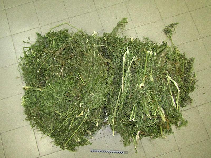 В Старом Осколе задержали банду наркоторговцев, фото-4