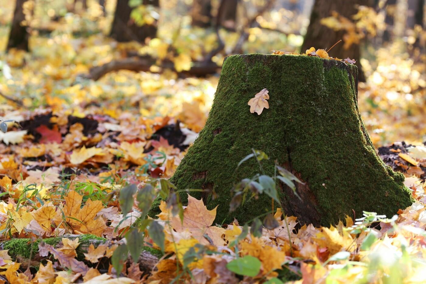 Белгородцам предлагают придумать концепцию будущего парка «Муромский лес», фото-2