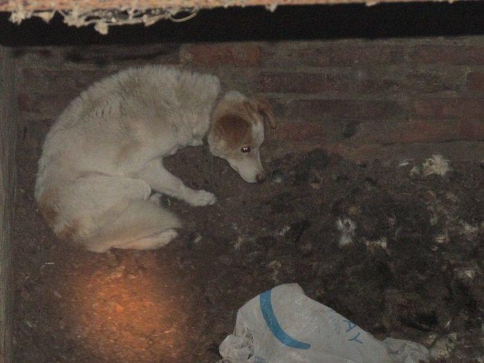 В Ивнянском районе спасли провалившуюся в подвал собаку, фото-1