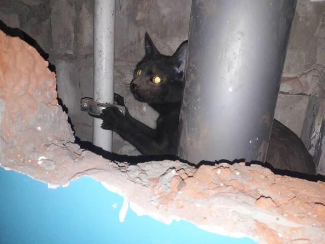 В Разумном в вентиляционную шахту упала кошка, фото-1