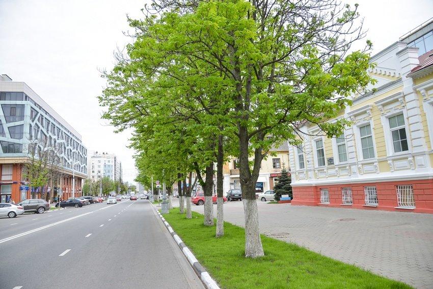 В Белгороде вместо усыхающих каштанов высадят клёны и липы , фото-3
