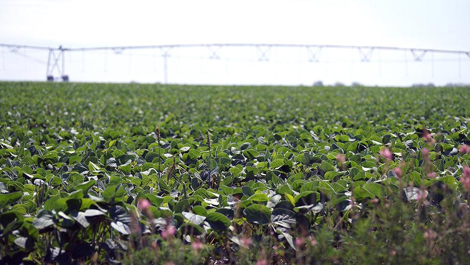 Белгородские аграрии завершают сев подсолнечника и кукурузы, фото-1