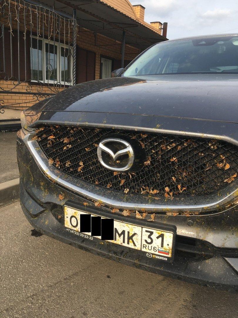 Белгородскую область атаковали бабочки-репейницы , фото-1