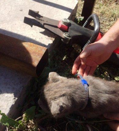 В Северном спасли застрявшего в трубе котёнка , фото-1