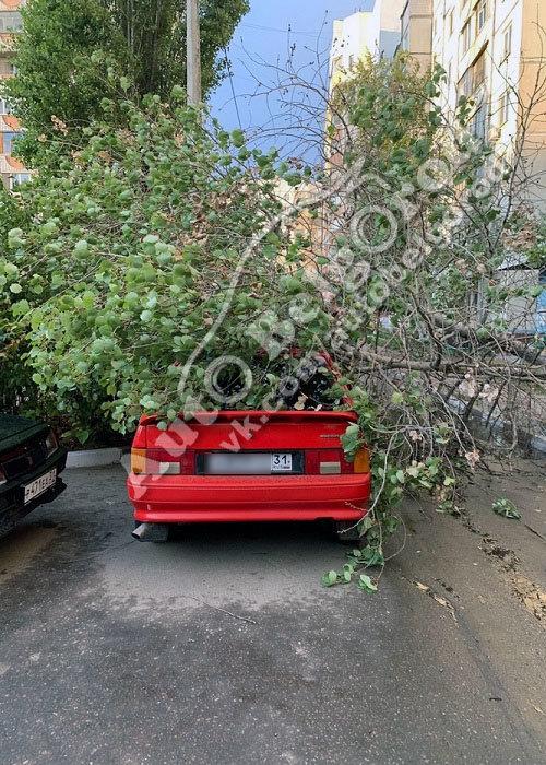 В Белгороде во дворе многоэтажки на машину упало дерево, фото-1, Фото: паблик «ВКонтакте» «Авто Белгород»