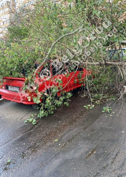 В Белгороде во дворе многоэтажки на машину упало дерево, фото-3, Фото: паблик «ВКонтакте» «Авто Белгород»