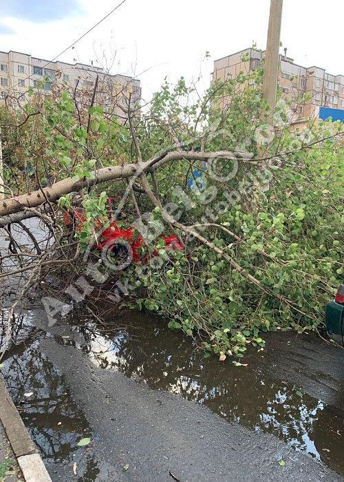 В Белгороде во дворе многоэтажки на машину упало дерево, фото-4, Фото: паблик «ВКонтакте» «Авто Белгород»
