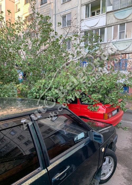 В Белгороде во дворе многоэтажки на машину упало дерево, фото-5, Фото: паблик «ВКонтакте» «Авто Белгород»