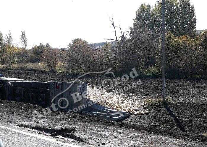 В Яковлевском районе перевернулась фура с кабачками, фото-3
