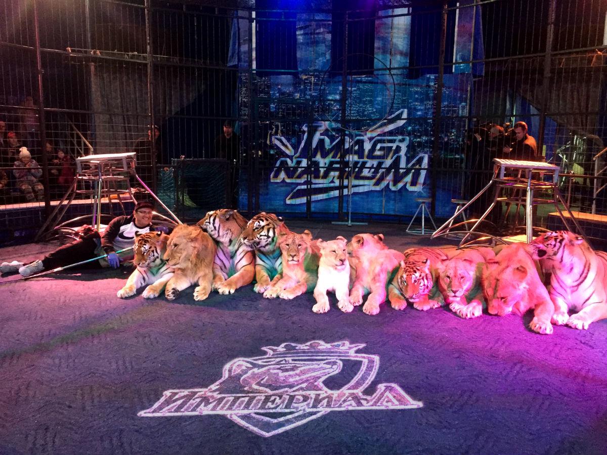 Международный цирк «Империал» провёл день открытых дверей в Белгороде, фото-1