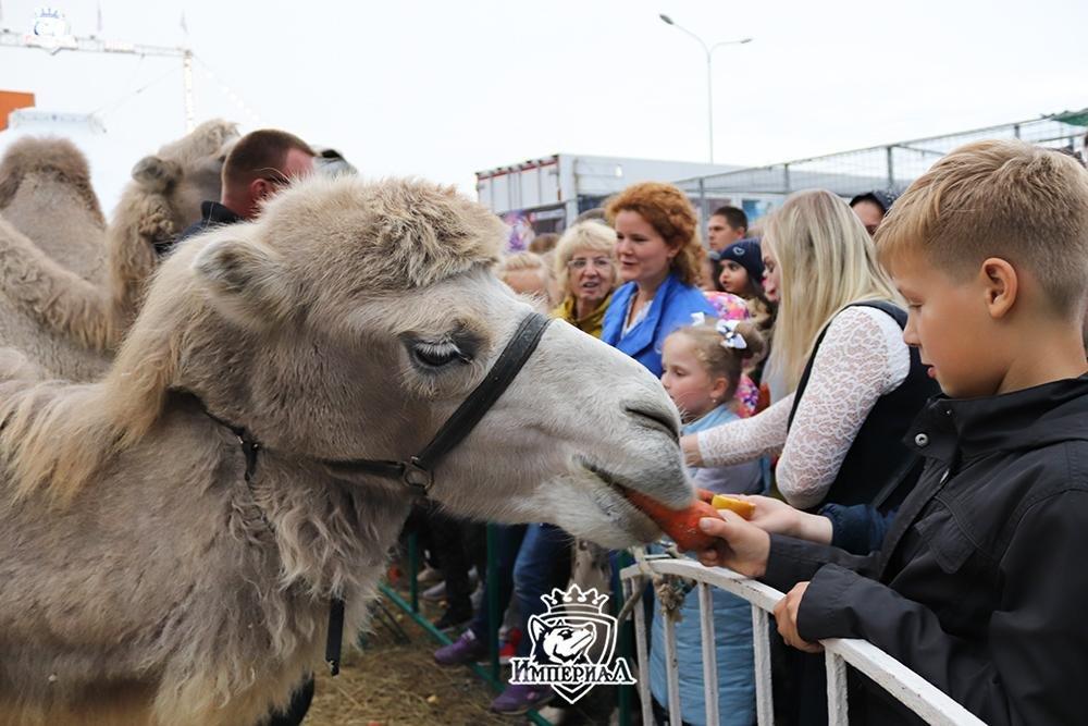 Цирковое шоу «Империал» приглашает белгородцев за кулисы, фото-4