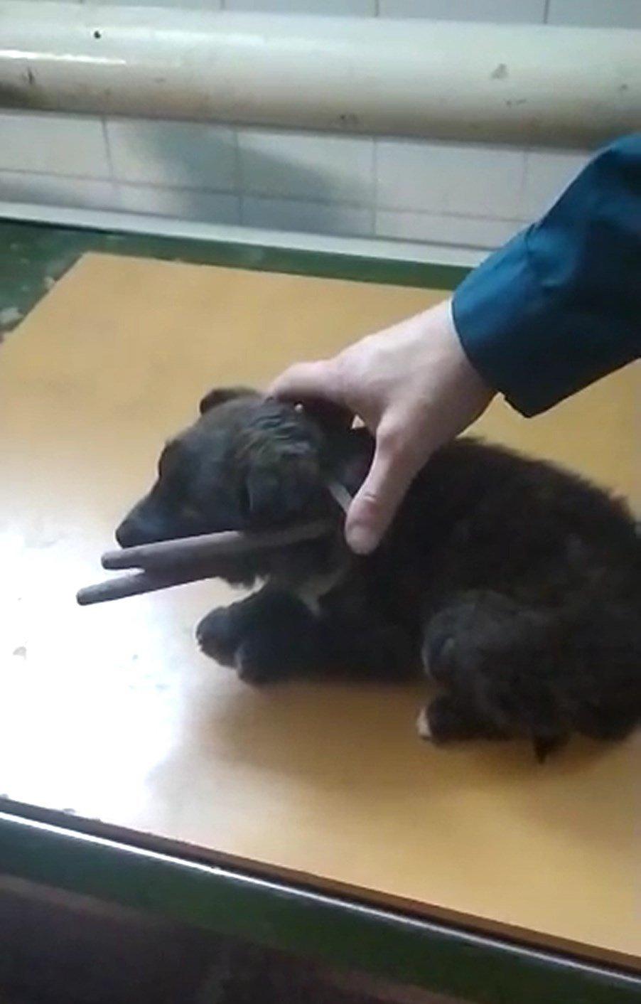 В Старом Осколе спасли застрявшего в металлической петле щенка, фото-2